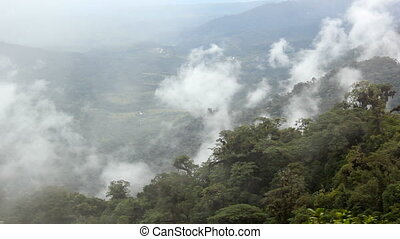 Misty cloudforest in Ecuador - In the Amazonian foothills of...