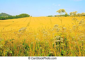 field 58