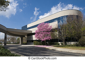 Hospital Entrance - Hospital drive through with pink tree at...