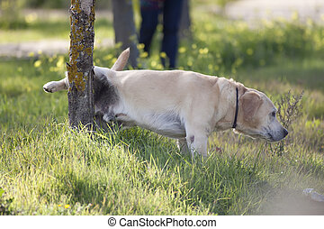 dog peeing - a dog peeing on a park tree
