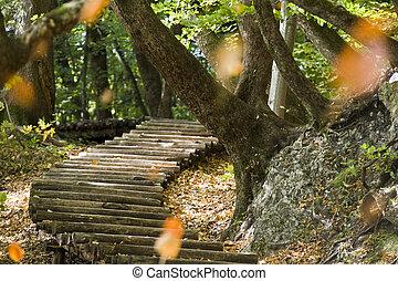 Steps at Plitvicka Jezera - Plitvice - Steps, leaves and...