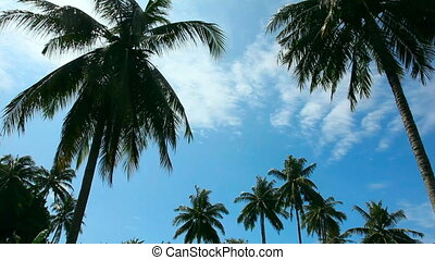 Coconut palm - Coconut palm and blue sky