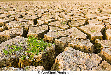 Cracked earth with grass , metaphoric for climate change and...