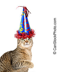 Cute cat with party hat on white background - Cute pet tabby...