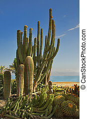 Botanical garden. - A botanical garden in an oasis on...
