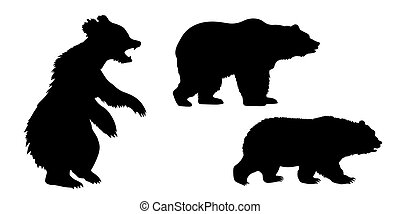 set of the bears on white background