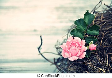 pink rose in the nest