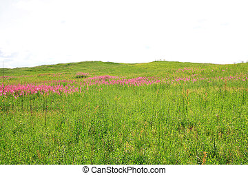 lilac flowerses on green field