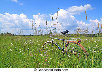 old bicycle amongst green herb