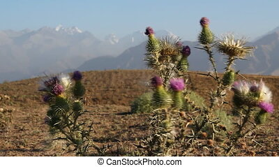 Prickly plant 29 - The Mountain landscape with prickly...