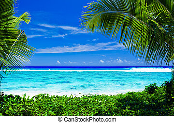 Deserted tropical beach framed by palm trees - Deserted...