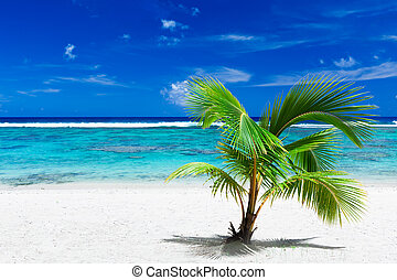 Small palm tree hanging over stunning blue lagoon