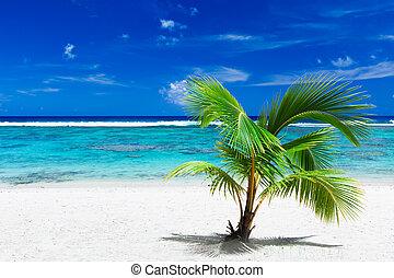 piccolo, palma, albero, appendere, sopra, tramortire, blu,...