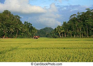Bohol Island, Philippines - Bohol Island on the West of...
