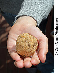 child who is holding a  walnut