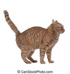 Frightened ginger kitten, isolated on white background
