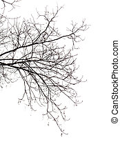 Bare Branches of a tree on a white background in the...