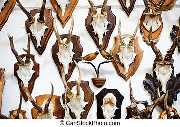 Deer head trophy collection on a white wall