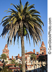 Palm in front of Flagler College - St Augustine historic...