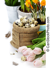 easter composition with eggs and spring flowers on white...