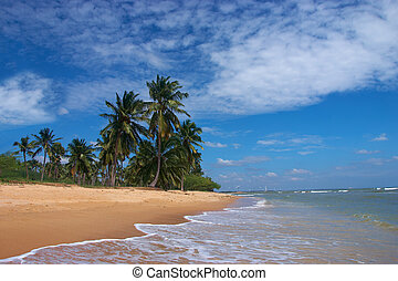 View of tropical sandy beach and palms