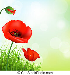 Red Poppy And Green Grass, Vector Background