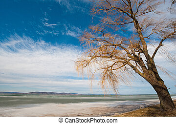 Balaton in winter - Tree at the frozen, iced lake of Balaton...