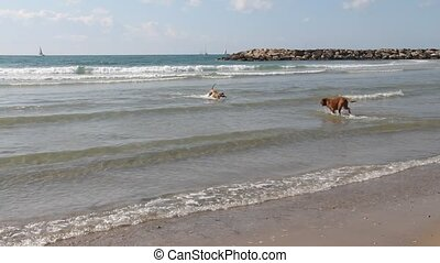 Playing with the dogs at the sea - A fun game with dogs by...