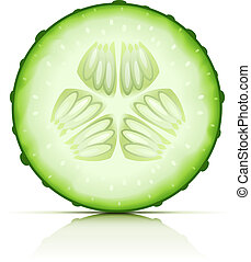 ripe cucumber cut segment vector illustration isolated on...