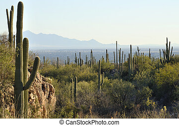 Tucson, Arizona - Valley of Tucson, Arizona as seen from...