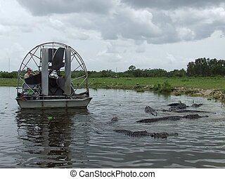 Everglades airboat in Florida - Everglades airboat in South...