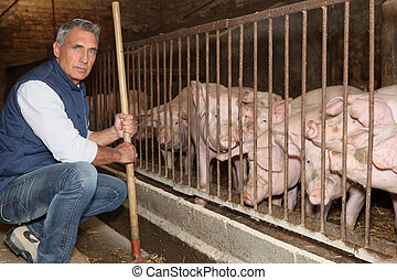 Man feeding pigs
