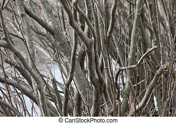 gray undergrowth - Bare branches of a shrub.