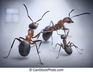 ants play human situation of family scandal, focused on...