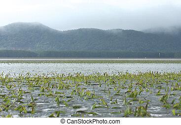 underwater seagrass at Chanthaburi, thailand - underwater...