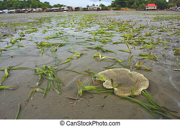 underwater seagrass at Chanthaburi, thailand - underwater...
