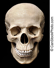 Skull model over black background