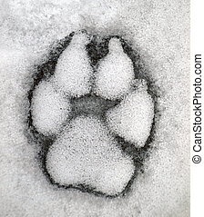 Dog track on the snow - Dog track on the snow. Picture can...