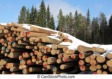 Pile of Softwood Logs in Spruce Forest - A pile of cut, snow...