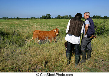 Farming couple in a field with a cow