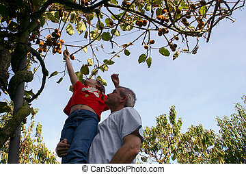 Father and son picking apples from a tree