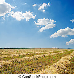 harvest in windrows and sunny sky with clouds