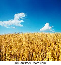 golden harvest on field under deep blue sky