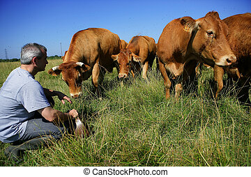 Farmer with his cows