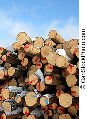 Cut Softwood Logs and Blue Sky - Stack of cut softwood logs...