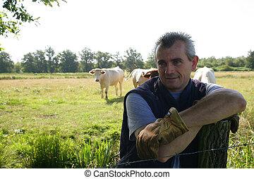 Farmer in a field of cattle