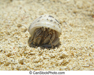 Mobile-Home - Photo by a hermit crab in the sand, wearing...