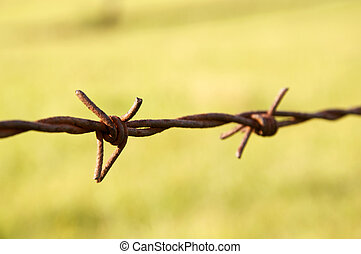Barbwire - Closeup of rusty barbed wire. Intentionally...
