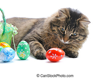 cat and easter eggs on white background