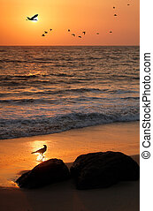 Flock of flying birds, crane and crow at seashore with a...
